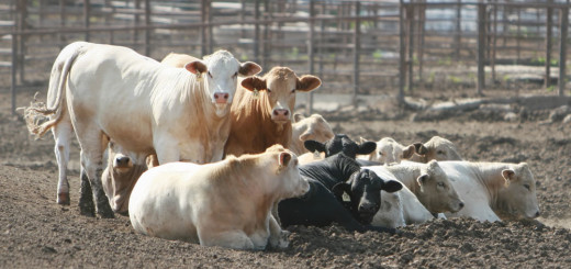 Vegan Environment Ecosystem Cows Feedlot