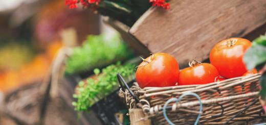 Vegan Living - Vegan Foods in South Africa