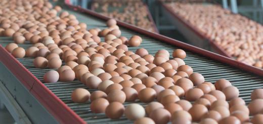 Vegan Living Vegetarian Eggs